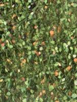 Beech_Foliage_Ea_4df48f4669d07.jpg