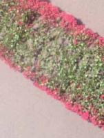 Flowers_Magenta_4df598791b975.jpg