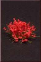 Flowers_Red_4dd788342d7a9.jpg