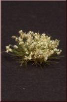 Flowers_White_4dd7a462cf8bf.jpg