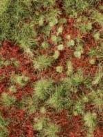 Overgrown_Forest_4df9dbd8b6fc2.jpg