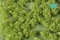 Weed_Tufts_Sprin_4e392b9b43558.jpg